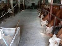 фермерское хозяйство за 250 млн 〒 в Ботакаре