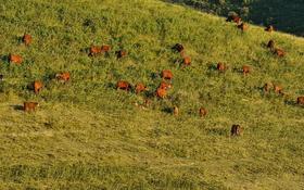 крестьянской хозяйство за 100 млн 〒 в Аксенгире