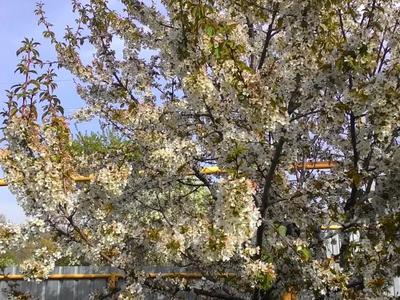 Дача с участком в 7 сот., Верхняя Каскеленская трасса за 18 млн 〒 — фото 11