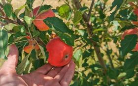 Ябдоневый сад за 10 млн 〒 в Тургене