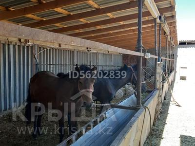 4-комнатный дом, 80 м², 10 сот., Енбек за 12 млн 〒 в Талдыкоргане — фото 10