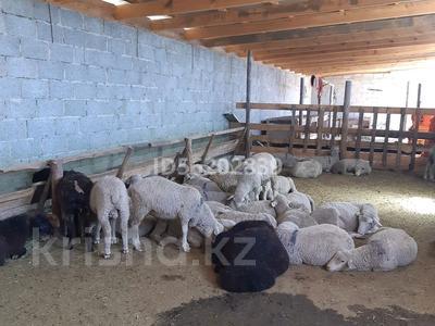 4-комнатный дом, 80 м², 10 сот., Енбек за 12 млн 〒 в Талдыкоргане — фото 12