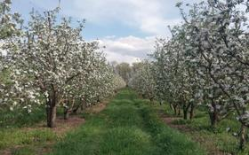 Яблоневый сад на 100 гектарах за ~ 2.1 млрд 〒 в Алматинской обл.
