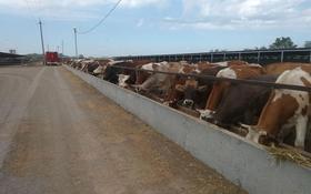 Действующая животноводческая мясо-молочная ферма за 739 млн 〒 в Акбастау
