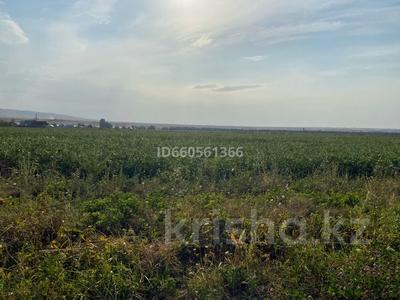 Участок 5 га, Ынтымак за 10 млн 〒 в Каргалы (п. Фабричный) — фото 5