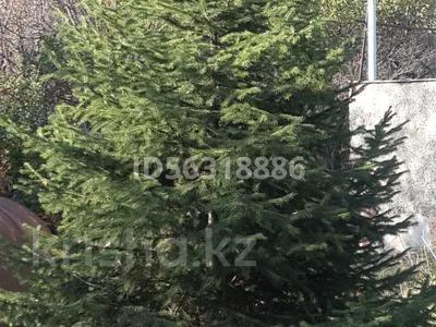 Дача с участком в 12 сот., Оазис за 5.7 млн 〒 в Каскелене — фото 2
