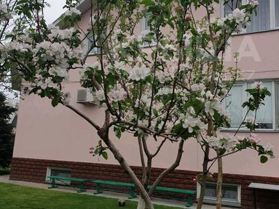 10-комнатный дом, 416 м², 16 сот., улица Гагарина 123/125 — Толебаева за 70 млн 〒 в Талдыкоргане — фото 13