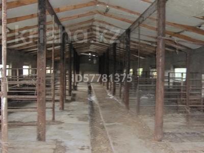 Продам крестьянское хозяйство за 38 млн 〒 в Остемире — фото 3