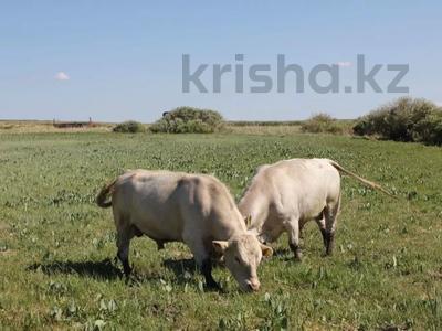 Участок 450 га, Шымкентская трасса за 55 млн 〒 в Таразе