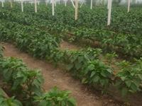 Услуги, сельское хозяйство