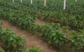 Услуги, сельское хозяйство, Абая за 62 млн 〒 в Талгаре