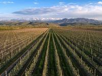 Интенсивный яблоневый сад за ~ 1.4 млрд 〒 в Узынагаш