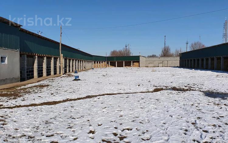 ферма, элитная ферма для скота за 55 млн 〒 в Шымкенте, Енбекшинский р-н