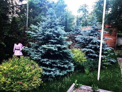 Здание, Амангельды 68А площадью 270 м² за 4 000 〒 в Алматы, Алмалинский р-н — фото 2