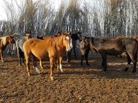 крестьянское хозяйство за 150 млн 〒 в Кульсары