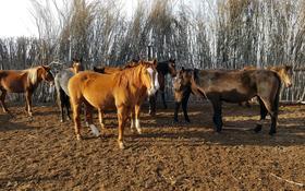 крестьянское хозяйство за 180 млн 〒 в Кульсары