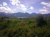 Ферма КРС за 35 млн 〒 в Талгаре