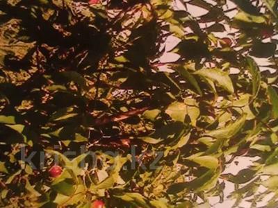 Дача с участком в 6 сот., Район села Меновное за 1.3 млн 〒 в Усть-Каменогорске — фото 6