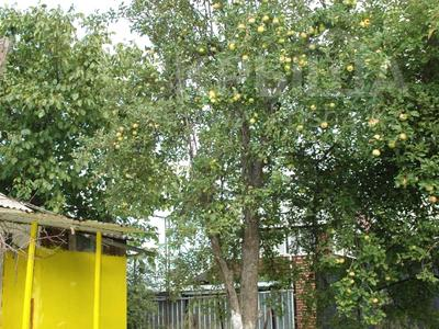 Дача с участком в 10.6 сот., СТ Весна 112 за 16.5 млн 〒 в Алматы, Наурызбайский р-н — фото 4