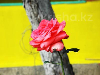 Дача с участком в 10.6 сот., СТ Весна 112 за 16.5 млн 〒 в Алматы, Наурызбайский р-н — фото 6