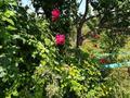 5-комнатный дом, 120 м², 10 сот., мкр Курамыс, Акшатыр 11 за 40 млн 〒 в Алматы, Наурызбайский р-н — фото 18