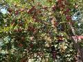 5-комнатный дом, 120 м², 10 сот., мкр Курамыс, Акшатыр 11 за 40 млн 〒 в Алматы, Наурызбайский р-н — фото 21