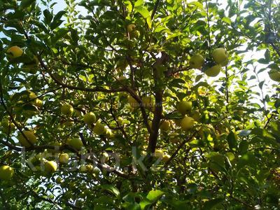 Яблочный сад, Фазенда помещика! за 98 млн 〒 в Есик — фото 5