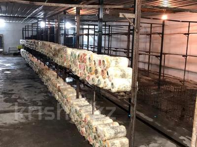 Действующий грибной бизнес склады за 50 млн 〒 в Алматы, Алатауский р-н — фото 3