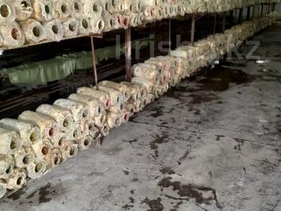 Действующий грибной бизнес склады за 50 млн 〒 в Алматы, Алатауский р-н — фото 2