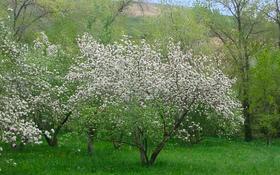 Плодоносящий сад за 42 млн 〒 в Есик